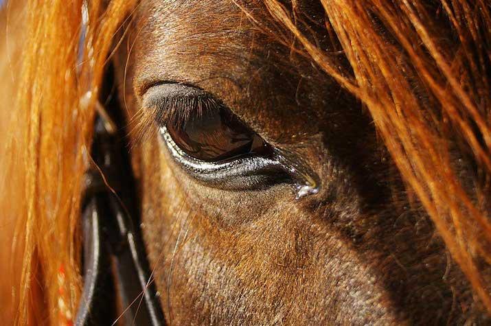 Garrapatas-en-caballos2