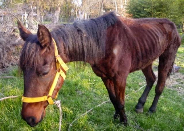 Garrapatas-en-caballos3