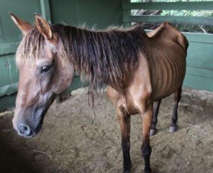 Garrapatas-en-caballos5