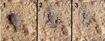 Hormigas-león2