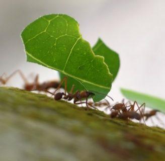 Hormigas voladoras u hormigas con alas: Tipos, plaga, picadura y más