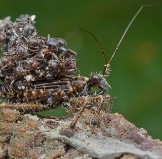 Insecto asesino: Todo lo que necesitas saber