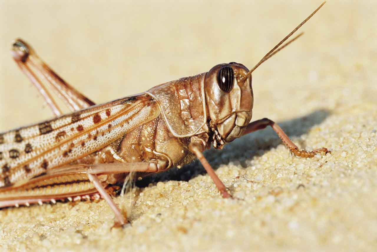 Insectos-5