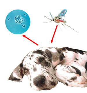 Mosquito-leishmaniasis4