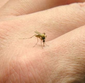 Picadura de mosquito tigre: Síntomas, tratamiento y más