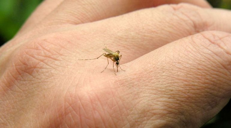 Picadura-de-mosquito-tigre3
