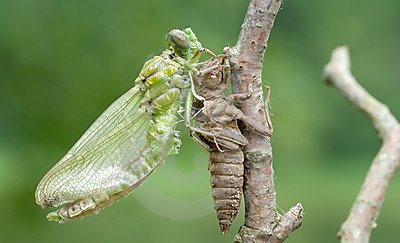 birth-dragonfly-series-5-photos-11604708