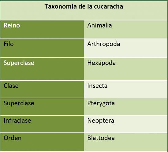 Taxonomia de la cucaracha