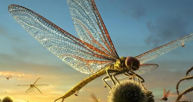 libelula-gigante