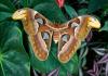 Mariposa gigante: Conoce sus diferentes tipos