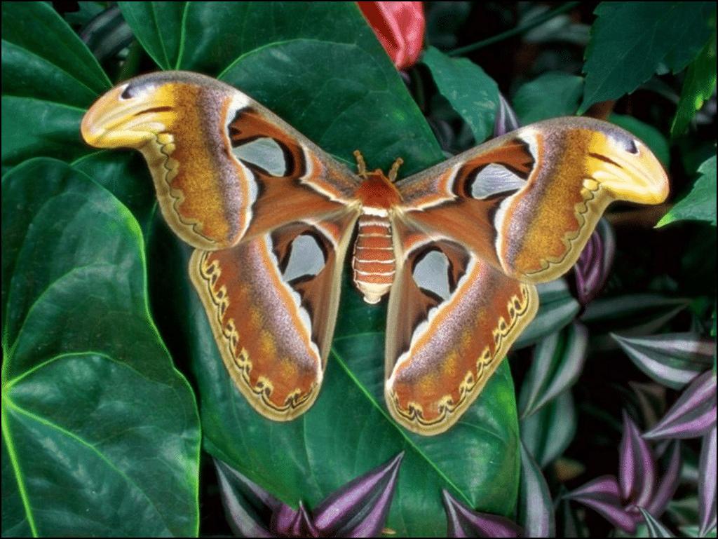 Mariposa gigante hermosa