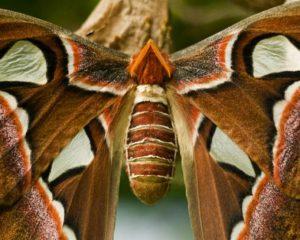 mariposa gigante motivadora