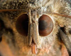 mariposa nocturna en detalle