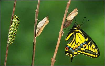 Metamorfosis De La Mariposa Conoce Todo El Proceso