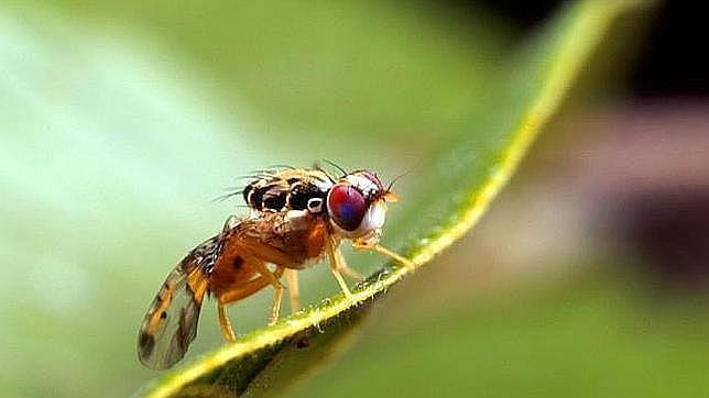 distribución de las moscas