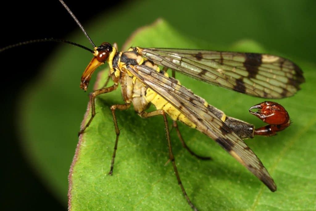 hábitat de la mosca