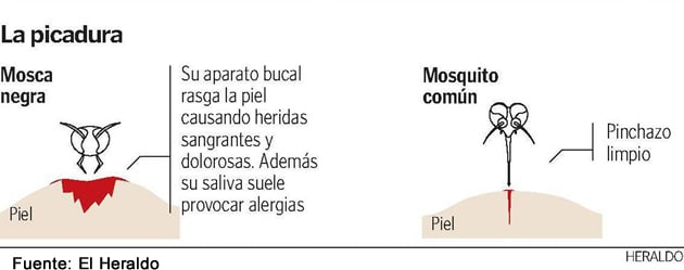 mosca-negra-picadura