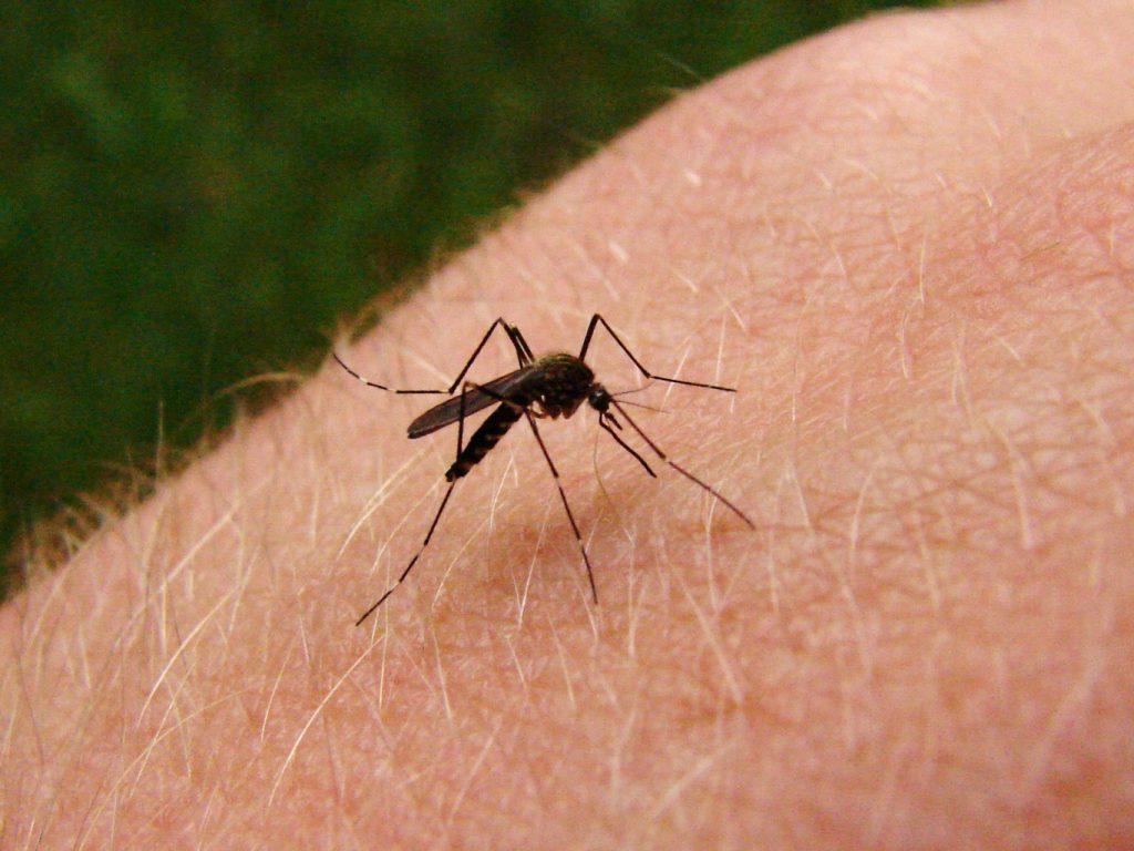 enfermedades que transmite el mosquito aedes aegypti