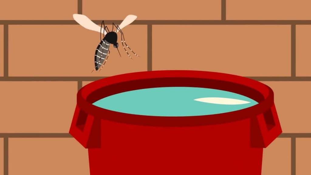 hábitat del mosquito aedes aegypti