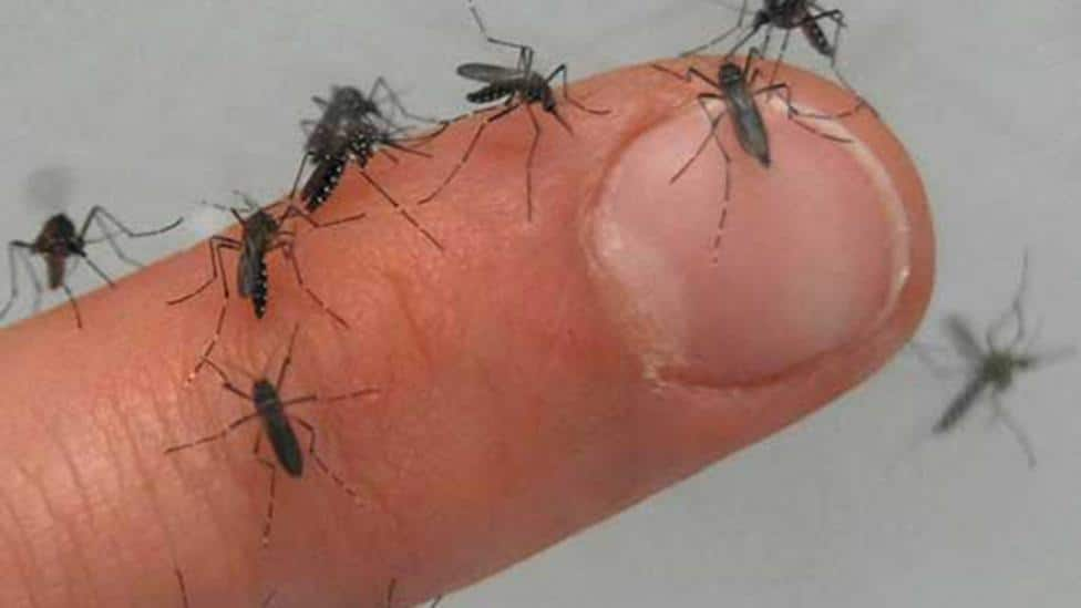 picadura de mosquito aedes aegypti o mosquito del dengue fiebre amarilla
