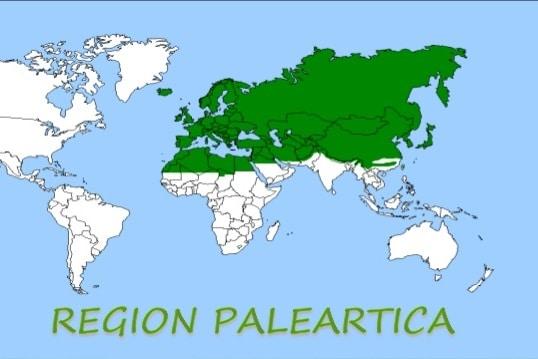 region-paleartica