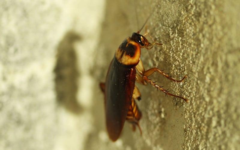 So ar con cucarachas conoce el simbolismos de estos sue os - Por donde salen las cucarachas en el cuarto de bano ...