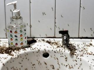 tipos de moscas en colombia