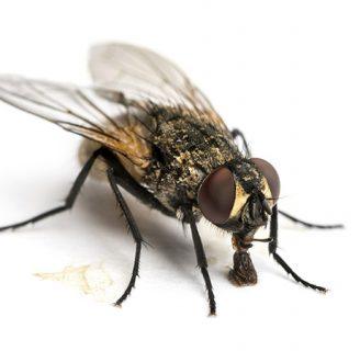 Tipos de moscas: Todo lo que debes saber sobre ellas