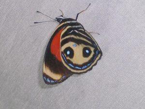 tipos de mariposas exoticas