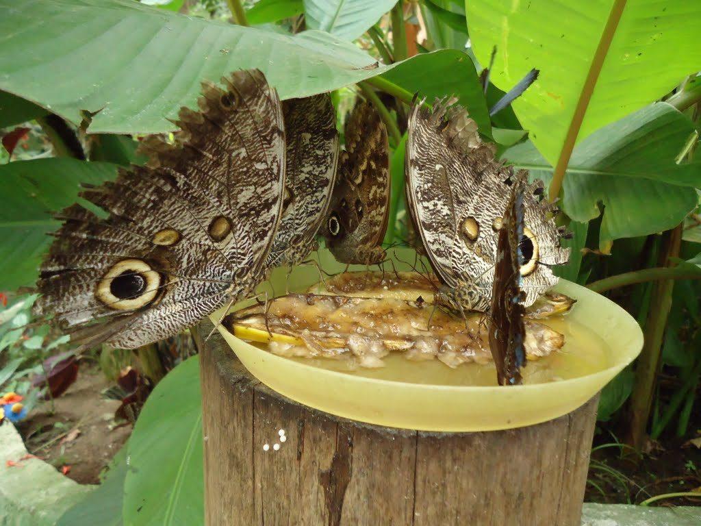 Tipos de mariposas alimentandoses