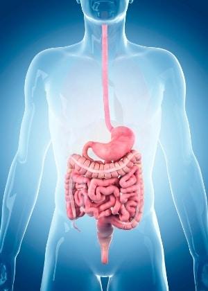 lombrices en el estomago