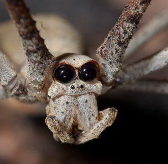 Arañasexóticas: Todo lo que debes saber sobre ellas