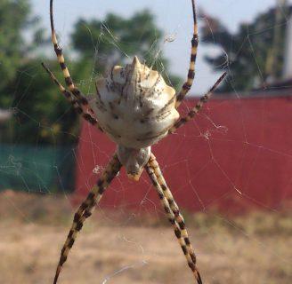 Arañas voladoras: Todo lo que debes saber