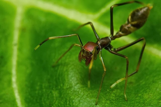 Arañas-exóticas3