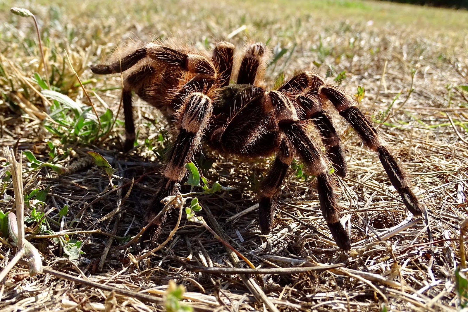 Arañas-pollitos5