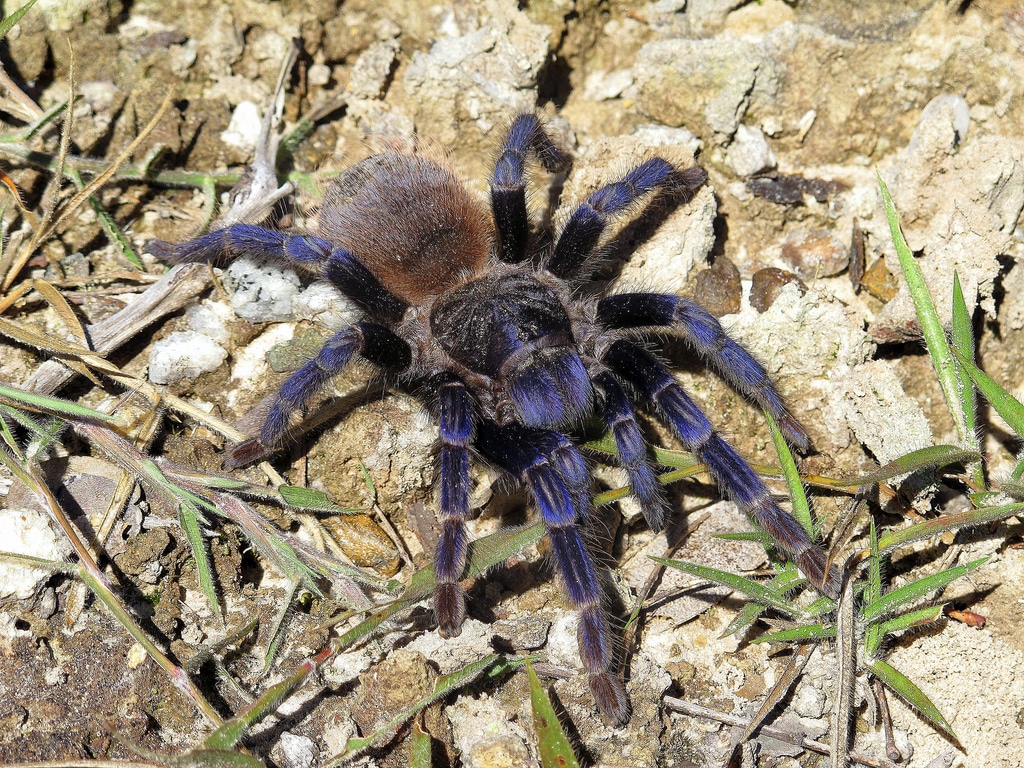 Arañas-pollitos6