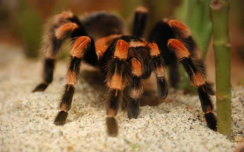 Arañas-pollitos8