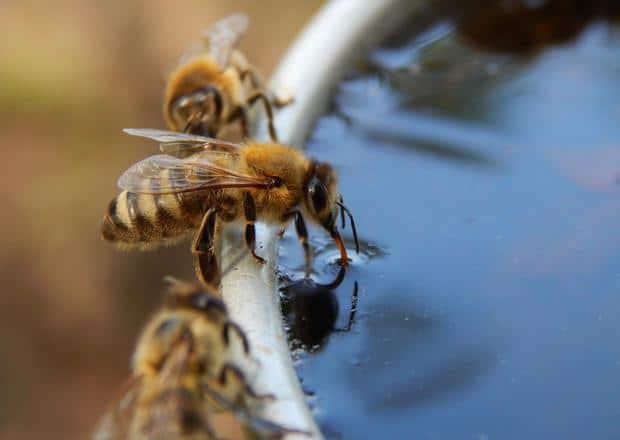 Cómo-atraer-abejas-a-una-colmena-vacía3