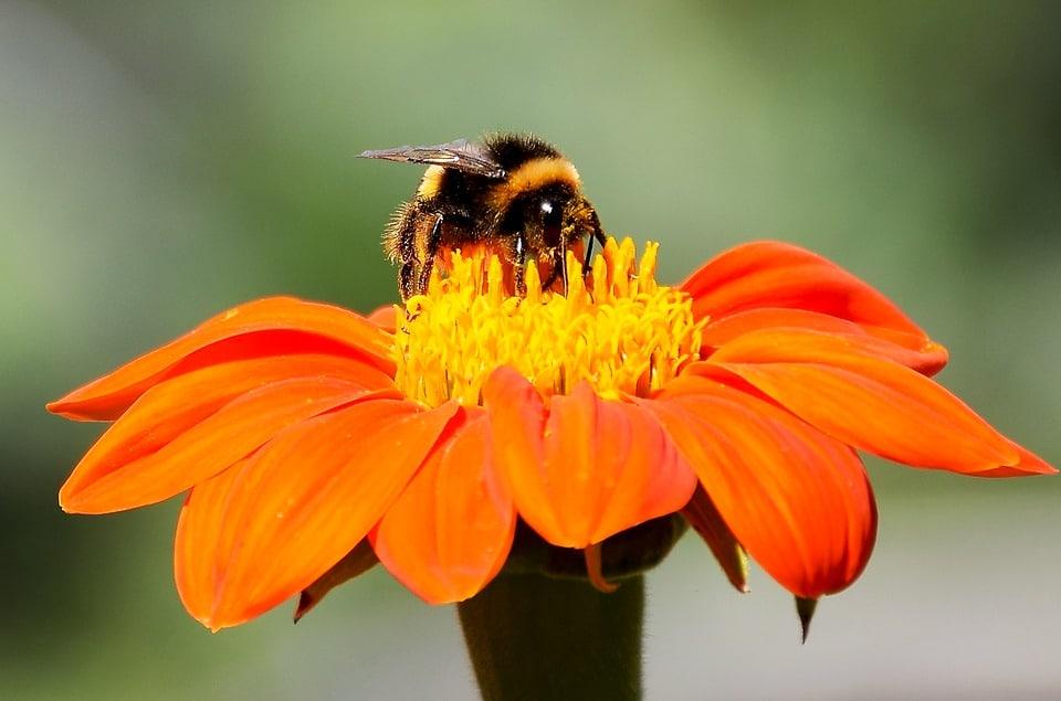 Cómo-atraer-abejas-a-una-colmena-vacía5