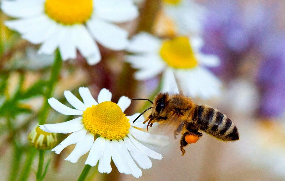 Cómo atraer abejas a una colmena vacía