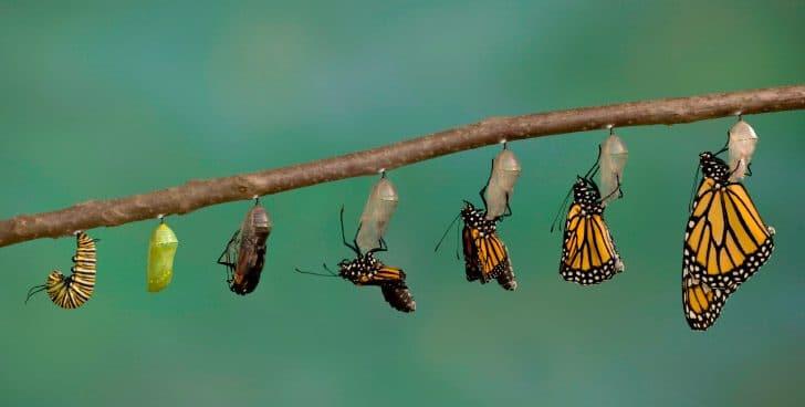 De oruga a mariposa