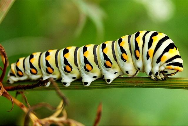 De-oruga-a-mariposa2