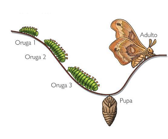 De-oruga-a-mariposa3