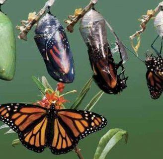 De orugaa mariposa: Aprende de la increíble transformación