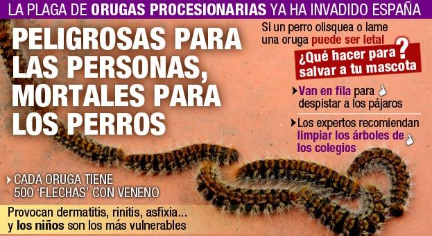Oruga-procesionaria-1