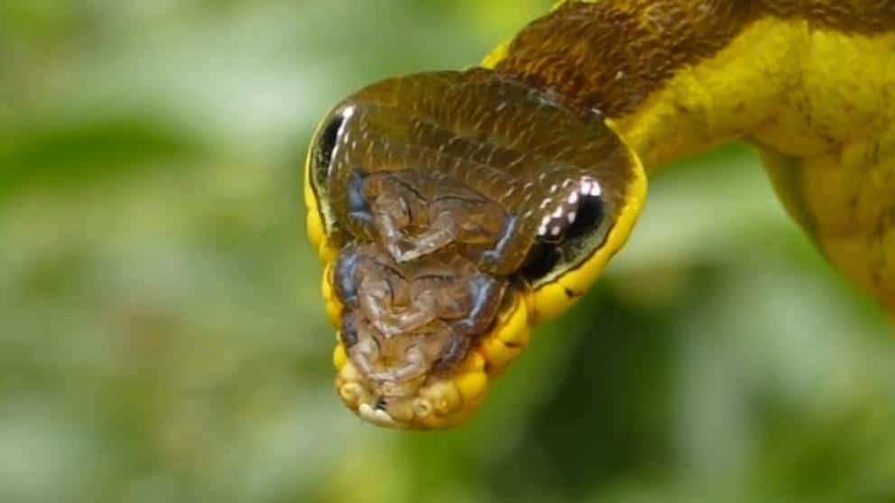 Oruga-serpiente4