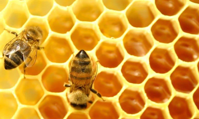 Por-qué-las-abejas-hacen-miel5
