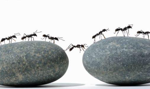 Por qué las hormigas caminan en fila