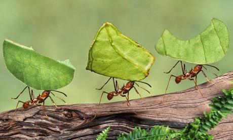Por-qué-las-hormigas-caminan-en-fila3