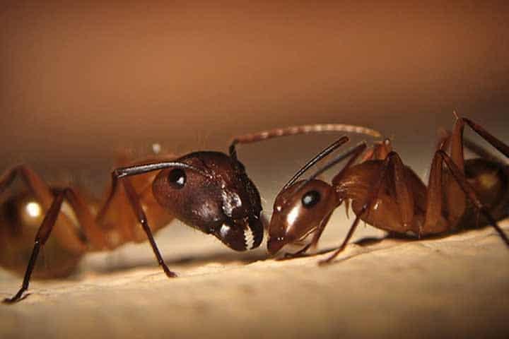 Por-qué-las-hormigas-caminan-en-fila5